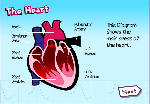 Heart teachingcave teachingcave heart ccuart Choice Image
