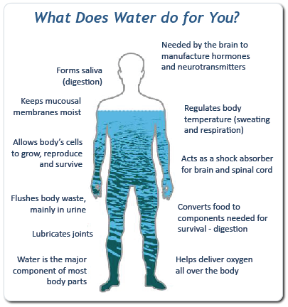 water is essential to human life essay